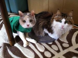 長いこと病気でも、一緒にがんばってきてたね☺︎ゆぅの優しさは、今まで出会ったどの猫よりも大きなものだったよ☺︎ この時もののに、カーペットを、譲ったね☺︎