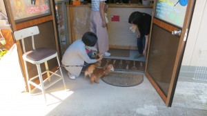 普段は休憩ばかりしているchoki choki dogsも今日は働きます!!