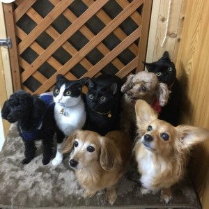choki choki dogs& cats☆ misuzu,kurumi,muu,kichi,fuzuki,tarao and katuo